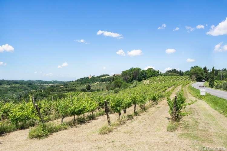 Bildet viser vinåker sett fra Strada del vino delle Colline Pisane, nært vinbyen Terricciola i Toscana