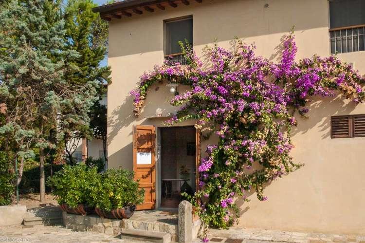 Bilde av vingården Villa Lamperi utenfor Firenze med buganvilla over inngangen.