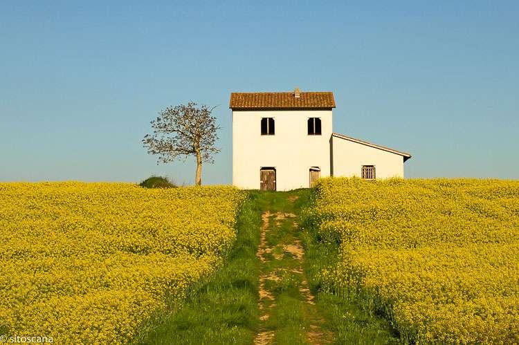 Bildet viser et hvitt hus som står i en gul blomstereng i Toscana, Italia. Ettermiddagssol. Brukt som forsidebilde på websiden sitoscana.no, som illustrasjonsbilde for kategorien Alle ferieboliger.