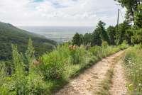 Bildet viser en av turveiene i åssiden ovenfor Montemagno. Utsikt mot Pisa og strendene ved Middelhavet.