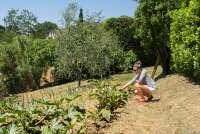 Bildet viser Karine Angell fra SiToscana som plukker grønnsaker i en grønnsakshage på et feriested ved landsbyen Fauglia i Toscana.