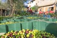 Bildet viser kasser med oliven. I bakgrunnen langbord med folk som spiser lunsj. Bildet er fra Toscana.