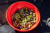 Bildet viser en bolle med oliven.
