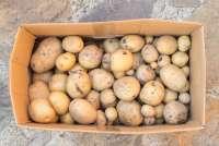 Bildet viser en pappeske med nyplukkede poteter. Esken står på stenheller på terrassen på en gård like utenfor Pisa i Toscana.